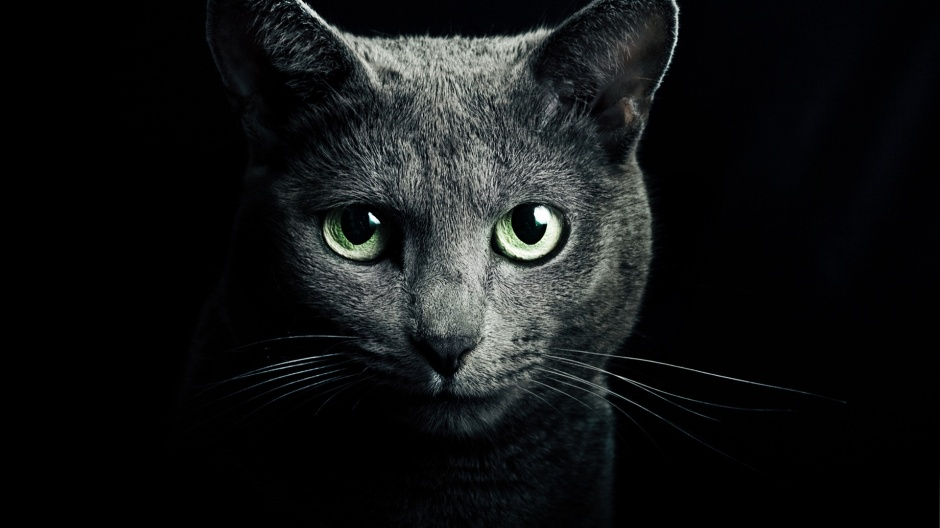 black-cats-with-green-eyes-wallpaper-1
