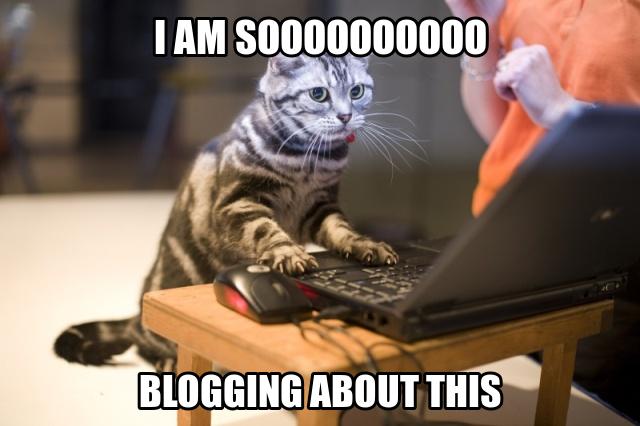 bloggingcat